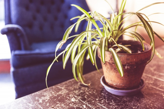 A plant in a house | Vivo Property Buyers