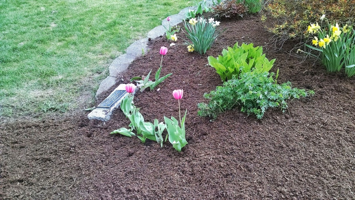 Mulch for plant growth